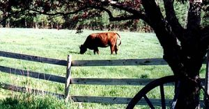 cow fence small farm